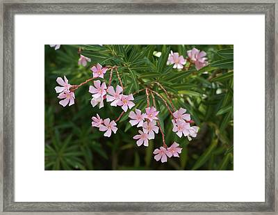 Pretty In Pink Framed Print by Debbie May