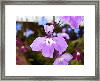 Pretty In Pink Framed Print by Deborah Brewer