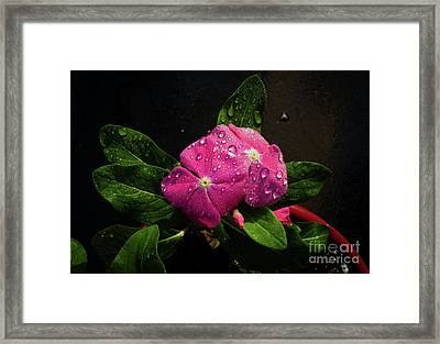 Framed Print featuring the photograph Pretty In Pink by Douglas Stucky