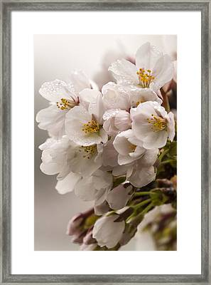 Pretty In Pink Framed Print by Edward Kreis