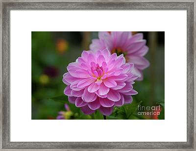 Pretty In Pink 1 Framed Print