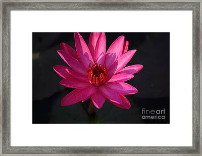 Pretty In Pink Framed Print by John S