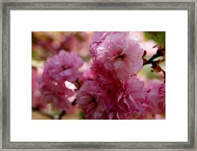 Pretty In Pink Framed Print by Lisa Jayne Konopka