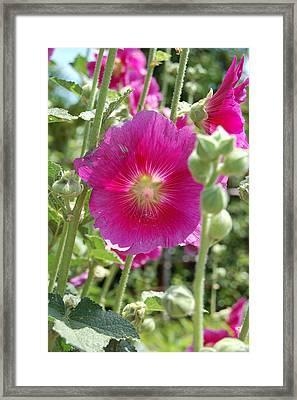 Pretty In Pink Framed Print by Lisa Patti Konkol