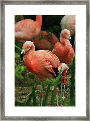 Pretty In Pink Framed Print by Martina Fagan