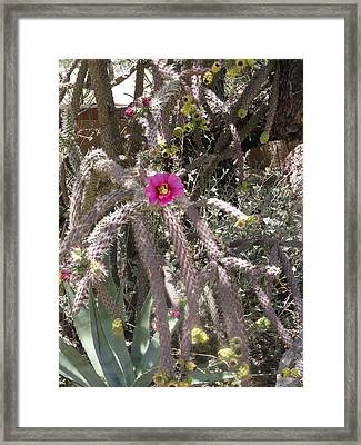 Flower Is Pretty In Pink Cactus Framed Print