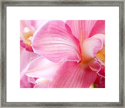 Pretty In Pink Orchid Petals Framed Print