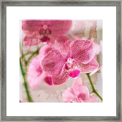 Pretty In Pink Framed Print by Pamela Ellis