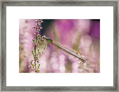 Framed Print featuring the photograph Pretty In Pink by Paul Farnfield