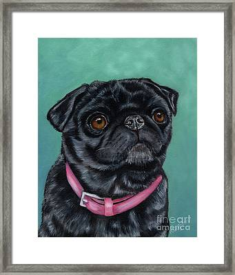 Pretty In Pink - Pug Dog Painting By Michelle Wrighton Framed Print by Michelle Wrighton