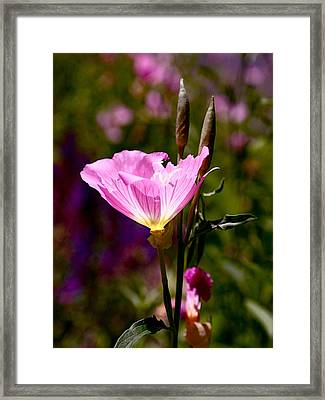 Pretty In Pink Framed Print by Rona Black