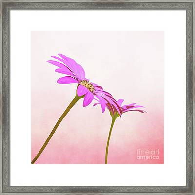 Pretty In Pink Framed Print by Roy McPeak