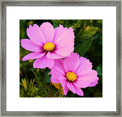 Pretty In Pink Framed Print by Russell  Barton