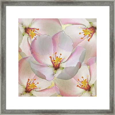 Pretty In Pink Framed Print by Stacey Chiew