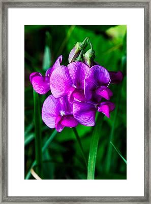 Pretty In Pink Wild Orchids Framed Print by John Haldane