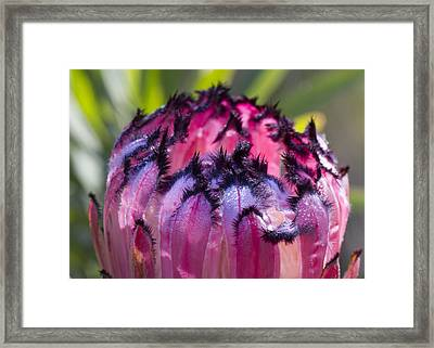 Framed Print featuring the photograph Pretty In Purple by Nathan Rupert