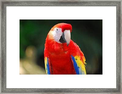 Pretty In Red Framed Print by Teresa Blanton