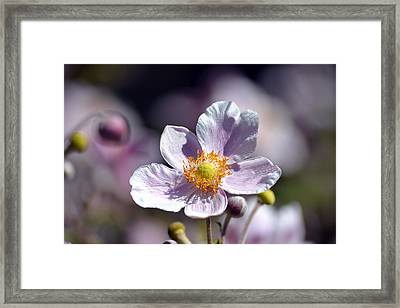 Pretty In White And Purple Framed Print by Lena Photo Art