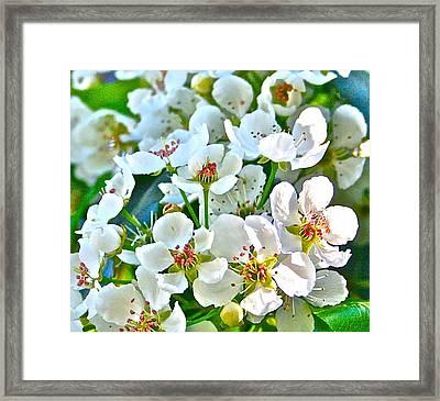 Pretty In White Framed Print by Gwyn Newcombe