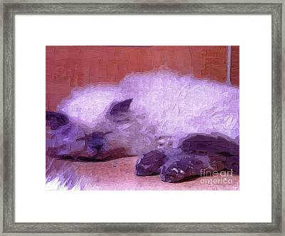 Pretty Kitty Framed Print by Deborah MacQuarrie-Selib