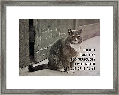 Pretty Kitty Quote Framed Print by JAMART Photography