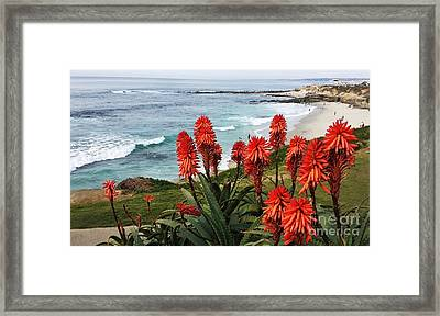 Pretty La Jolla View Framed Print by Jasna Gopic