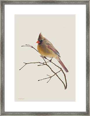 Pretty Lady Framed Print by Ron Jones