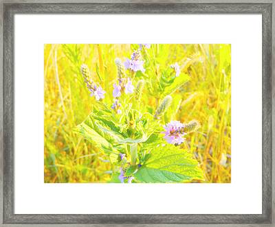 Pretty Lilac Framed Print