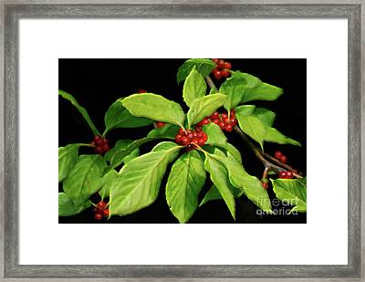 Framed Print featuring the photograph Pretty Little Red Berries by Lois Bryan