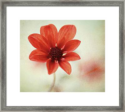 Pretty Orange Flower Framed Print by Captured by Karen photography