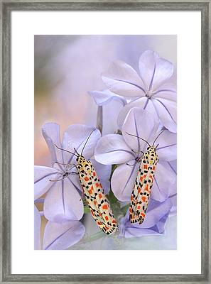Pretty Pair Framed Print by Jimmy Hoffman
