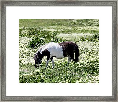 Pretty Painted Pony Framed Print by James BO Insogna