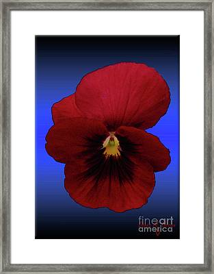 Framed Print featuring the photograph Pretty Pansy by Donna Brown