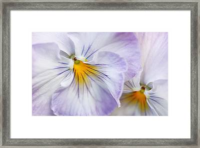 Pretty Pansy Flowers Framed Print by Jennie Marie Schell