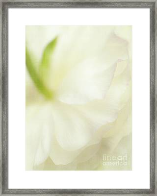 Pretty Paper  Framed Print by Beve Brown-Clark Photography
