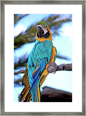 Pretty Parrot Framed Print