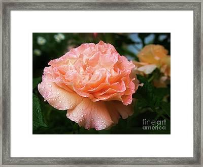 Pretty Peach Peony Flower Framed Print