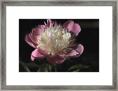 Pretty Peony Framed Print by Donna Kennedy