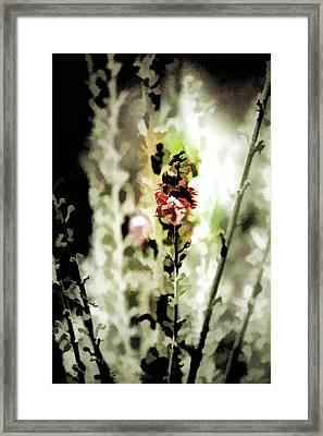Pretty Perennial Framed Print by Bonnie Bruno