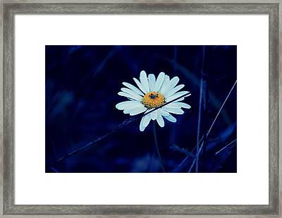 Pretty Petals Framed Print