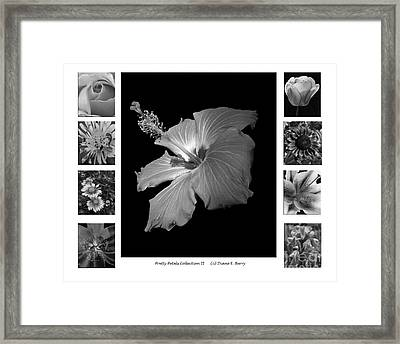 Framed Print featuring the photograph Pretty Petals Collection II by Diane E Berry