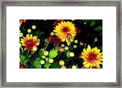 Pretty Petals Framed Print by Marsha Heiken