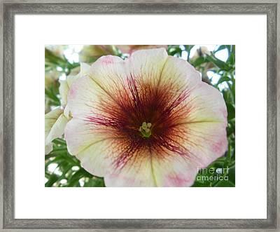 Pretty Petunia Framed Print by Sonya Chalmers