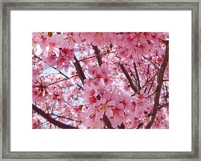 Pretty Pink Cherry Blossom Tree Framed Print