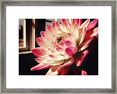 Pretty Pink Framed Print by JAMART Photography