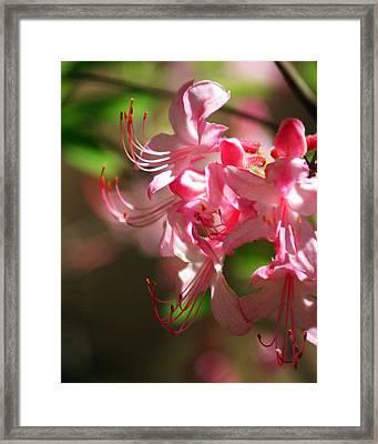 Pretty Pink Framed Print by Marty Koch