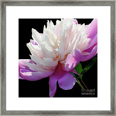 Pretty Pink Peony Flower Wall Art Framed Print