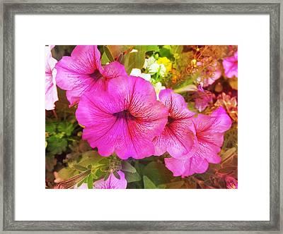 Pretty Pink Petunias Framed Print