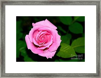 Pretty Pink Rose By Kaye Menner Framed Print