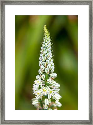 Pretty Pods Framed Print